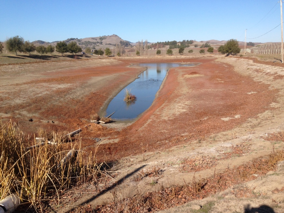 Carneros area pond impacted by 2013/2014 drought.