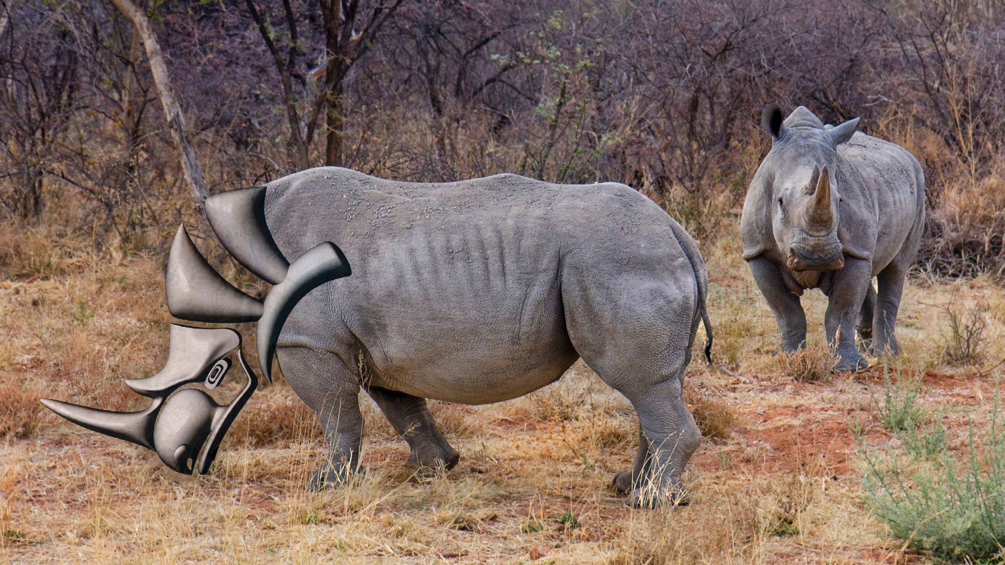 Rhino in Reality 2.png