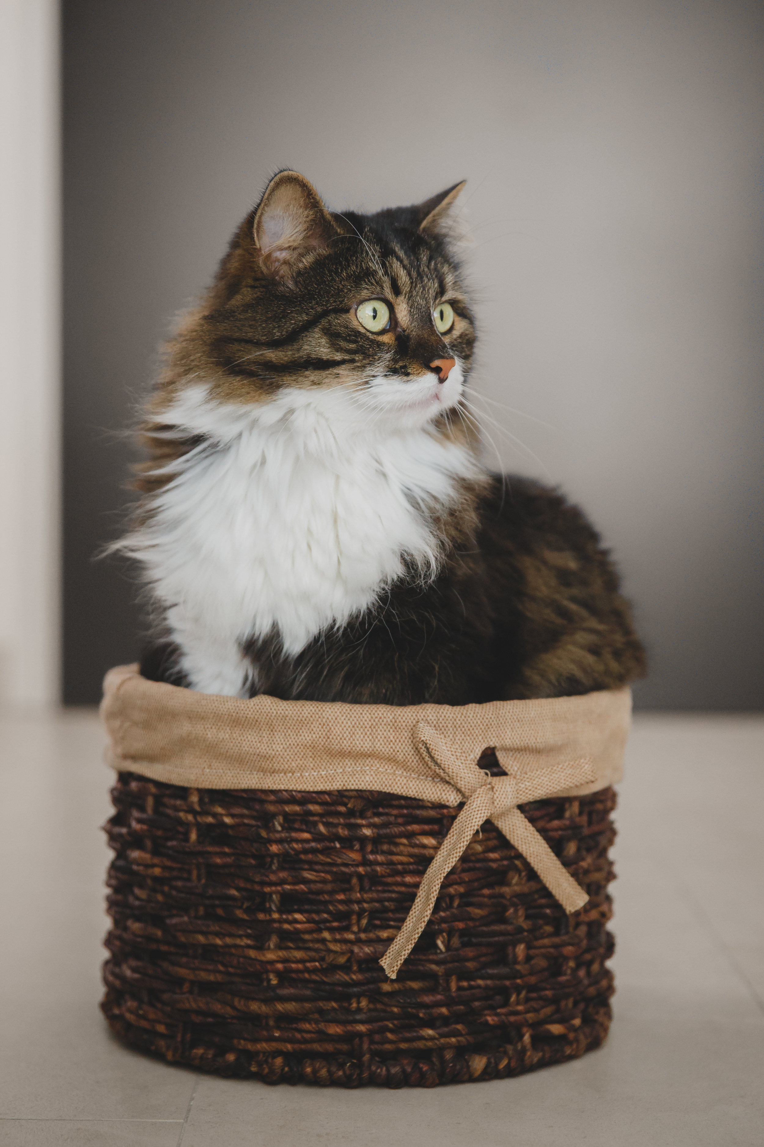 Fluffy, in all his baskety magnificence.