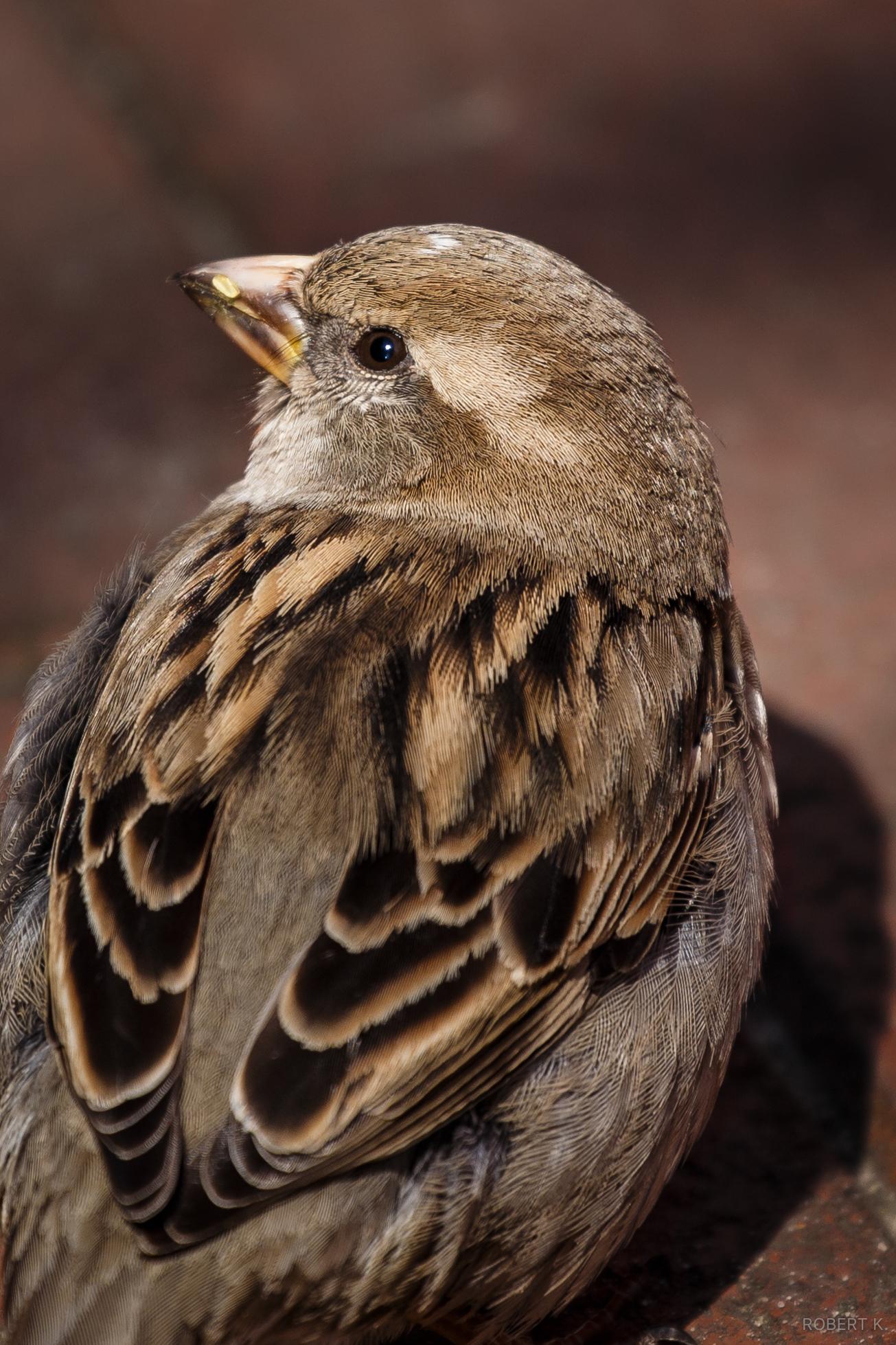 An easy bird photo.  Canon 6D,300mm,ƒ/5.6,1/400s,ISO 100