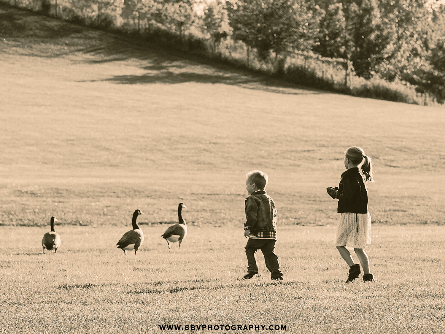 Brother and sister chase the geese at Oak Ridge Prairie County Park in Griffith, Indiana.