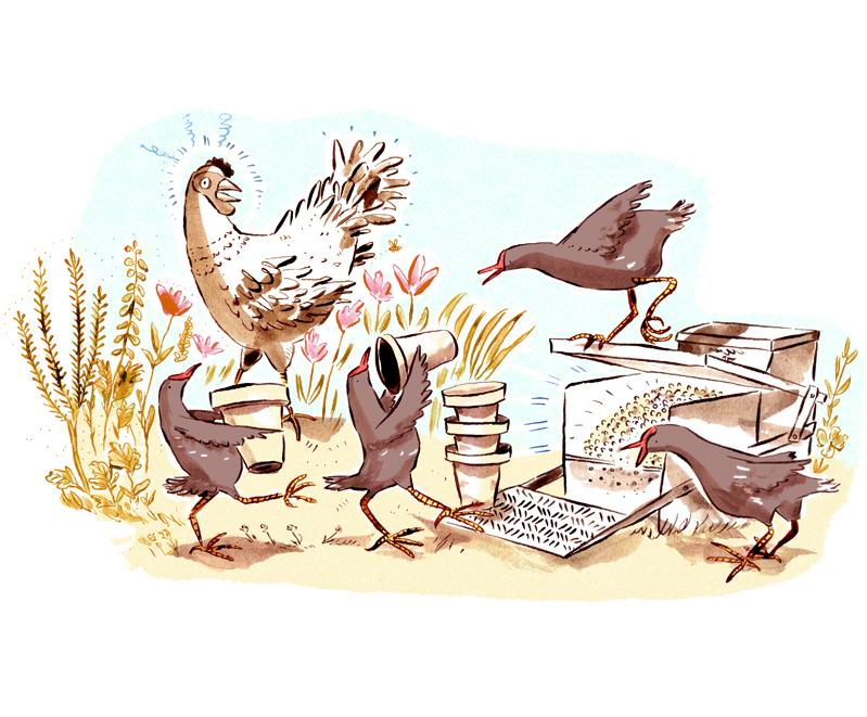 chickens02.jpg
