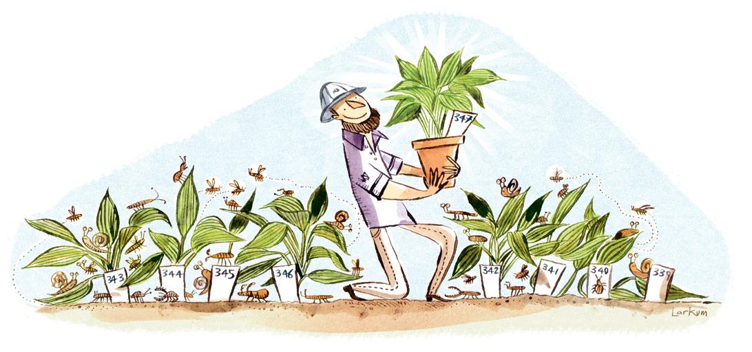 manyplants.jpg