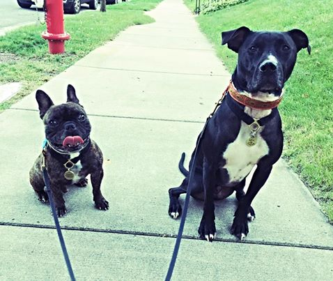 Gremlin and Cash