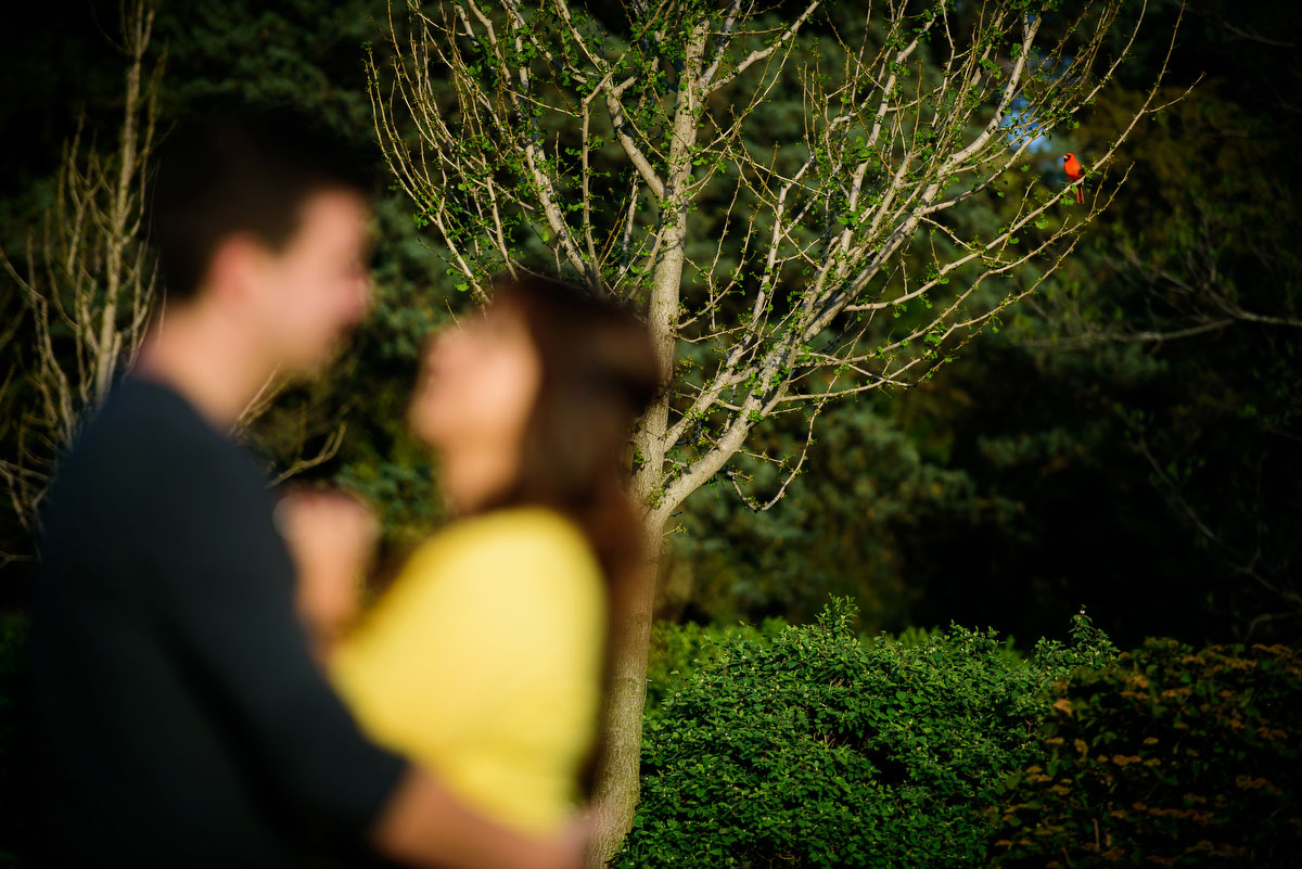 A cardinal hangs outduring a couple'sengagement session at the Morton Arboretum in Lisle, IL.