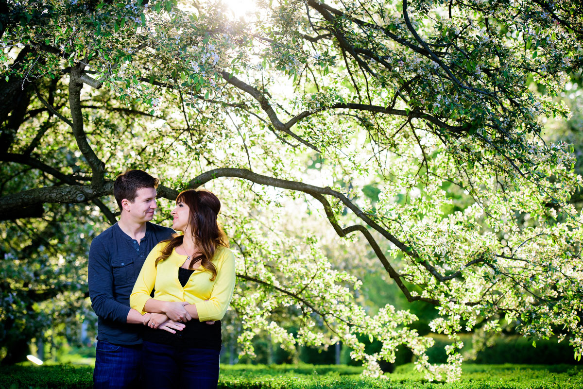 The setting sun sneaks throw the blooming tree during a couple'sengagement session at the Morton Arboretum in Lisle, IL.