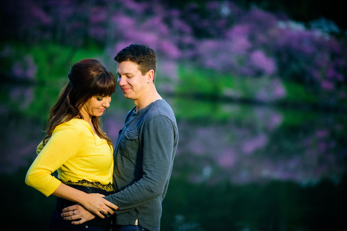 The purple trees in bloom reflect off a lake during a couple's engagement session at the Morton Arboretum.