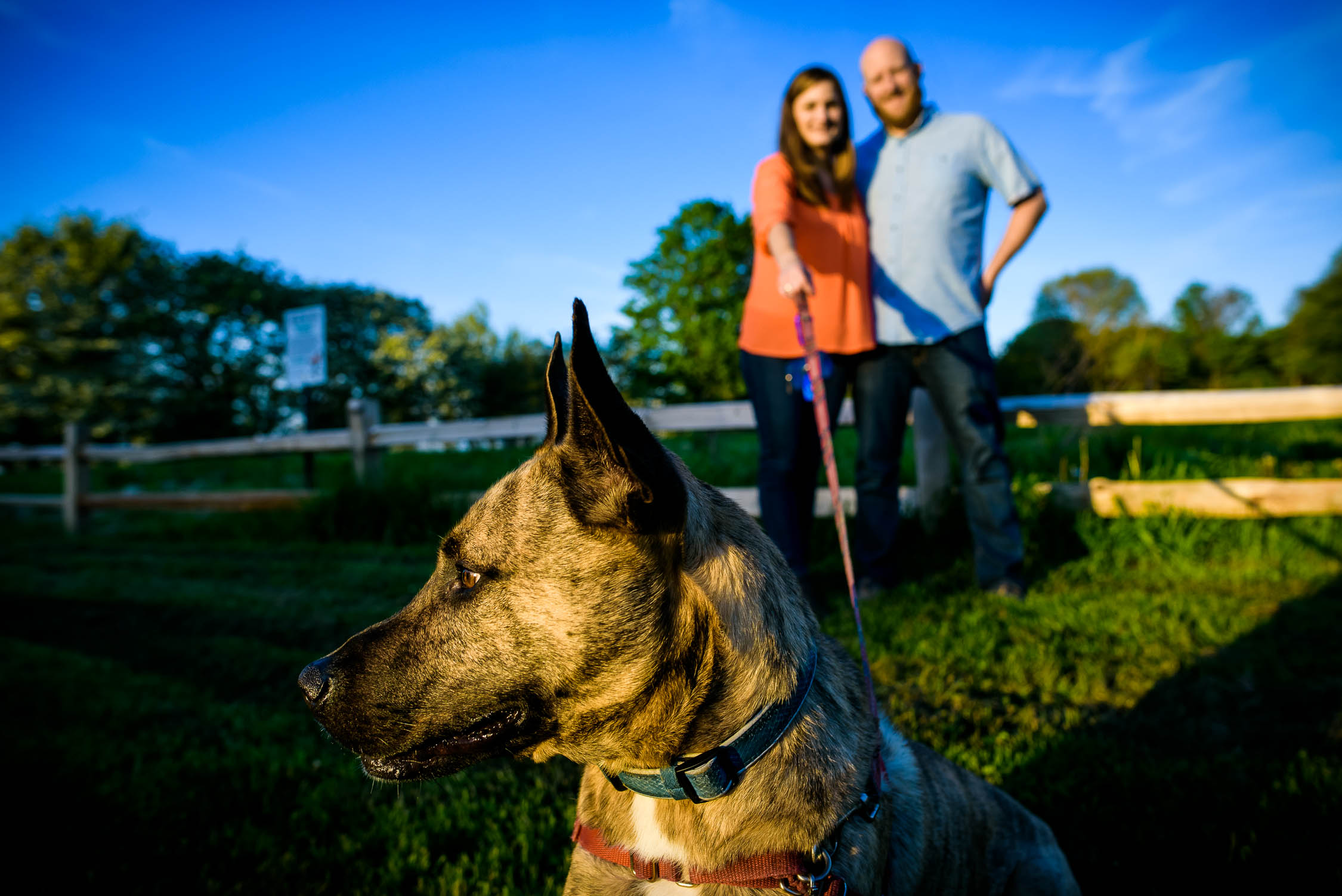 Couple's dog keeping watch during their engagement session at Montrose Harbor in Chicago.