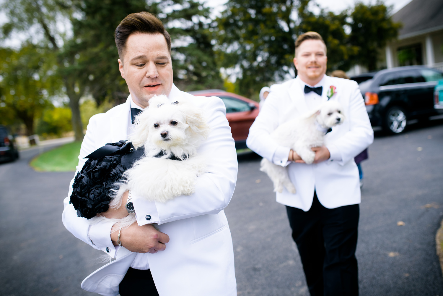 Grooms and their dogs during a same sex wedding at Heritage Prairie Farm.