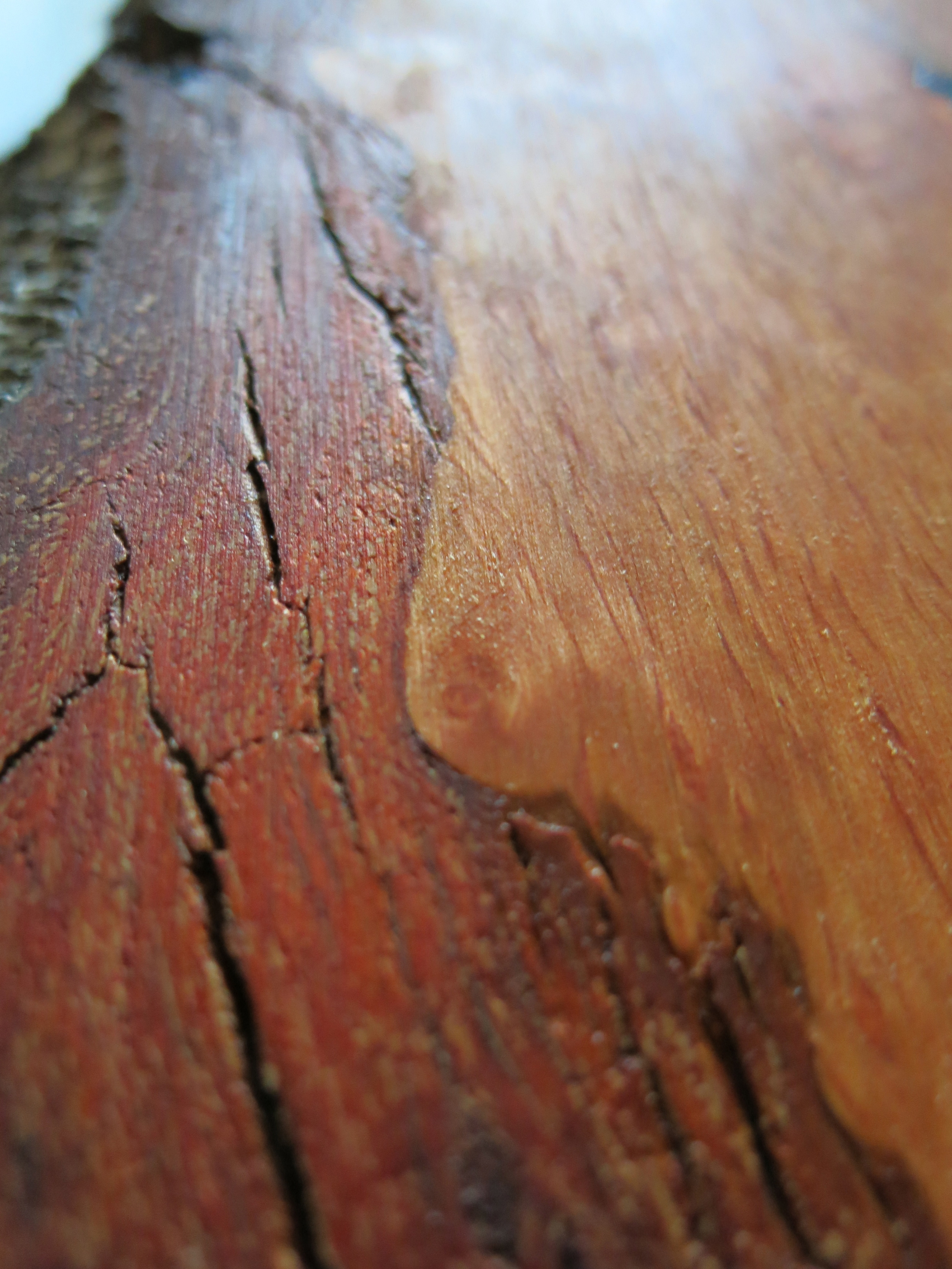 Alnus glutinosa has beautiful orange wood when oiled. By keeping the bark intact, the character of the tree is not lost.