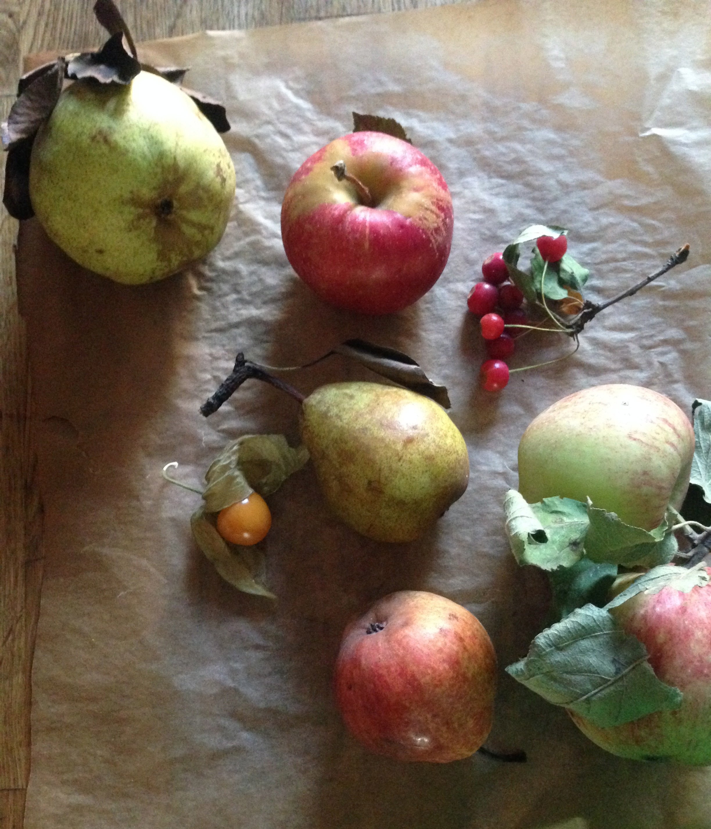 Leftover fruits from recent photo shoots for The Cookbook...