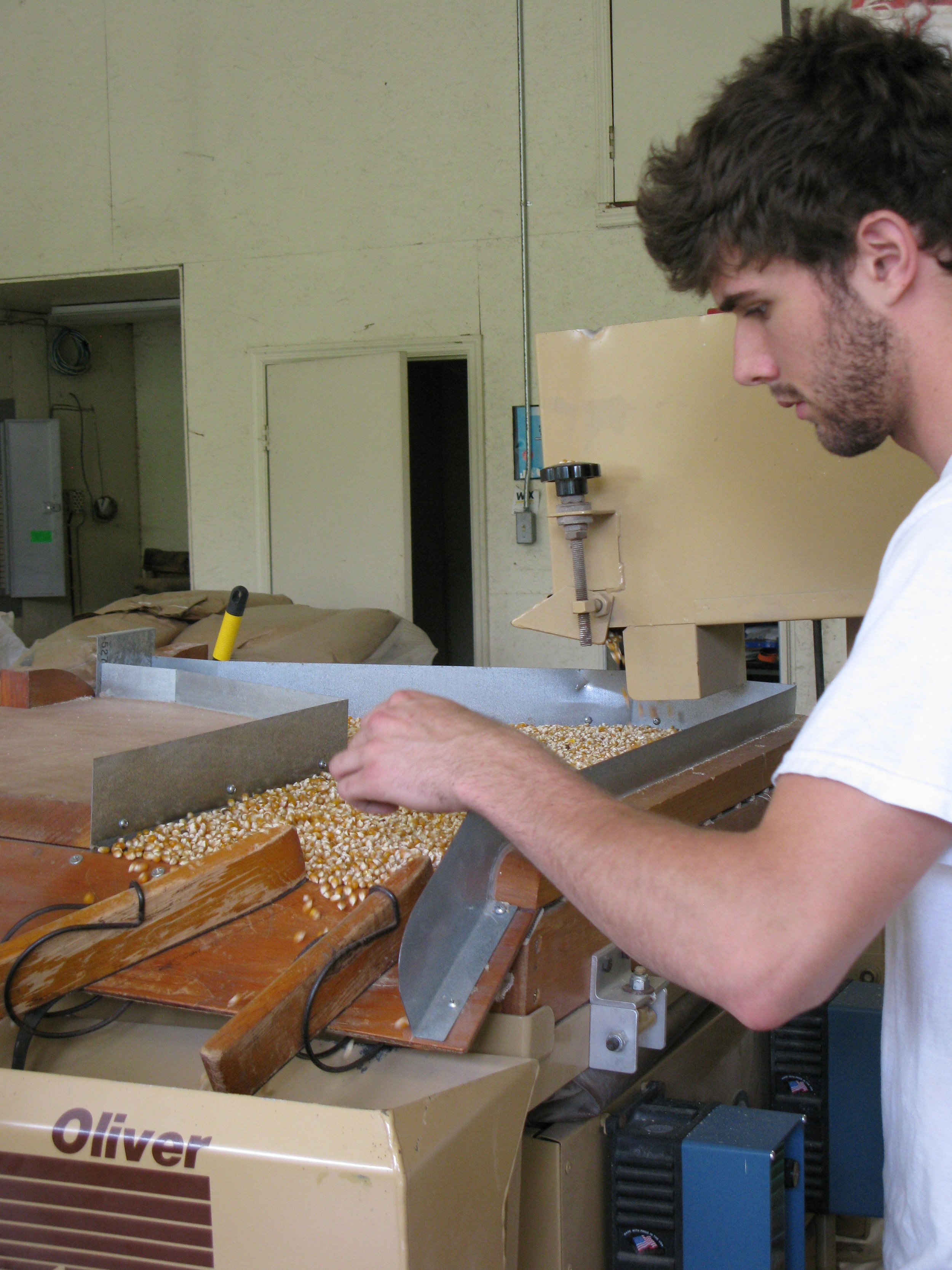 A student picking through organic popcorn on a gravity table that sorts by density.