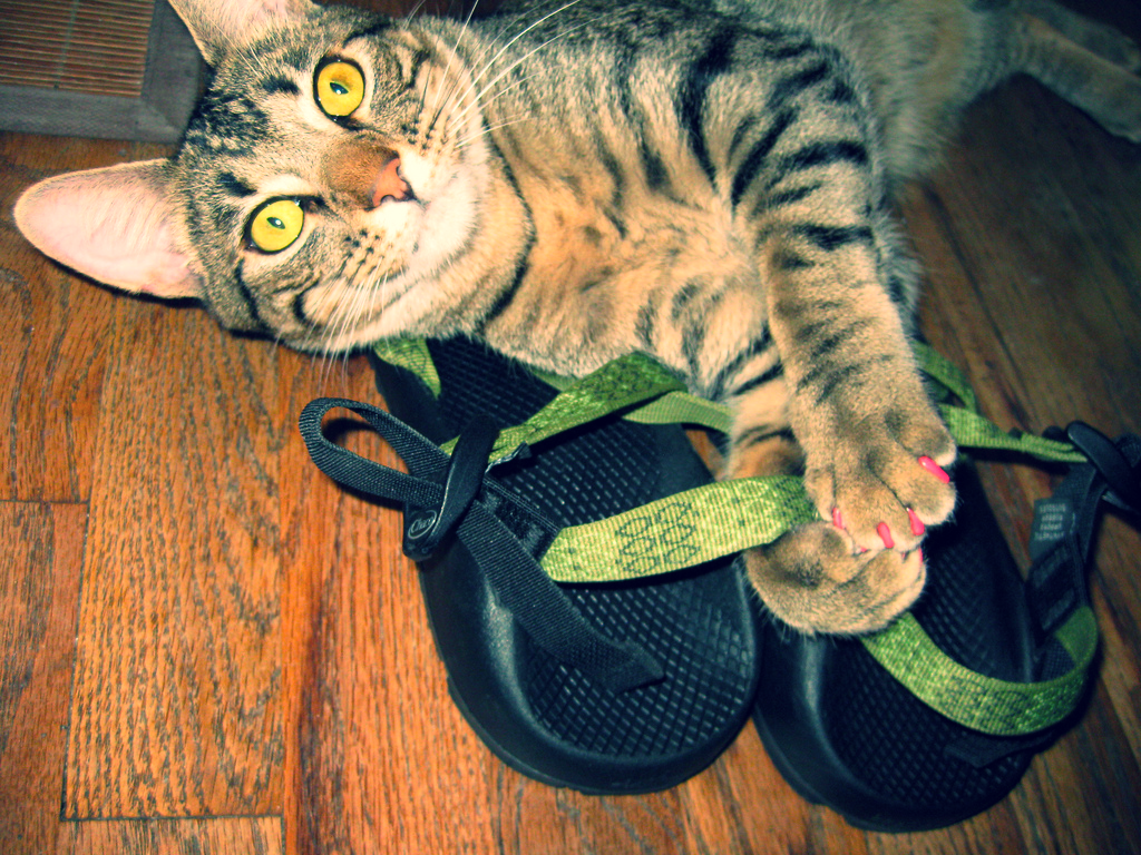 Kitty with one pair of Chacos.