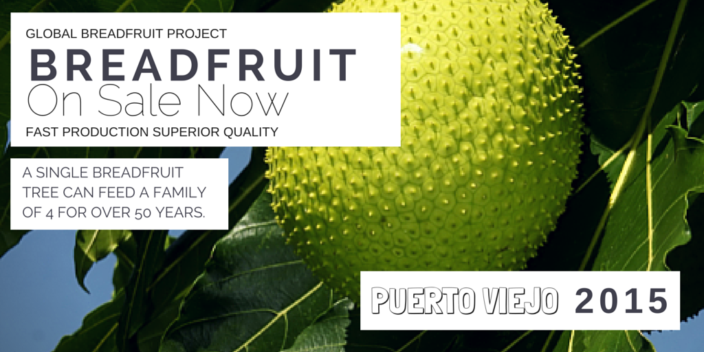 Breadfruit Costa Rica