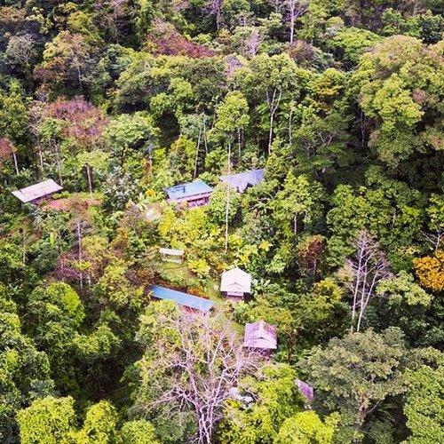 REGENERATIVE HOMESTEAD AND FOREST FARM.jpg
