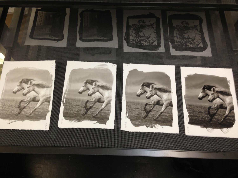 Platinum Prints drying