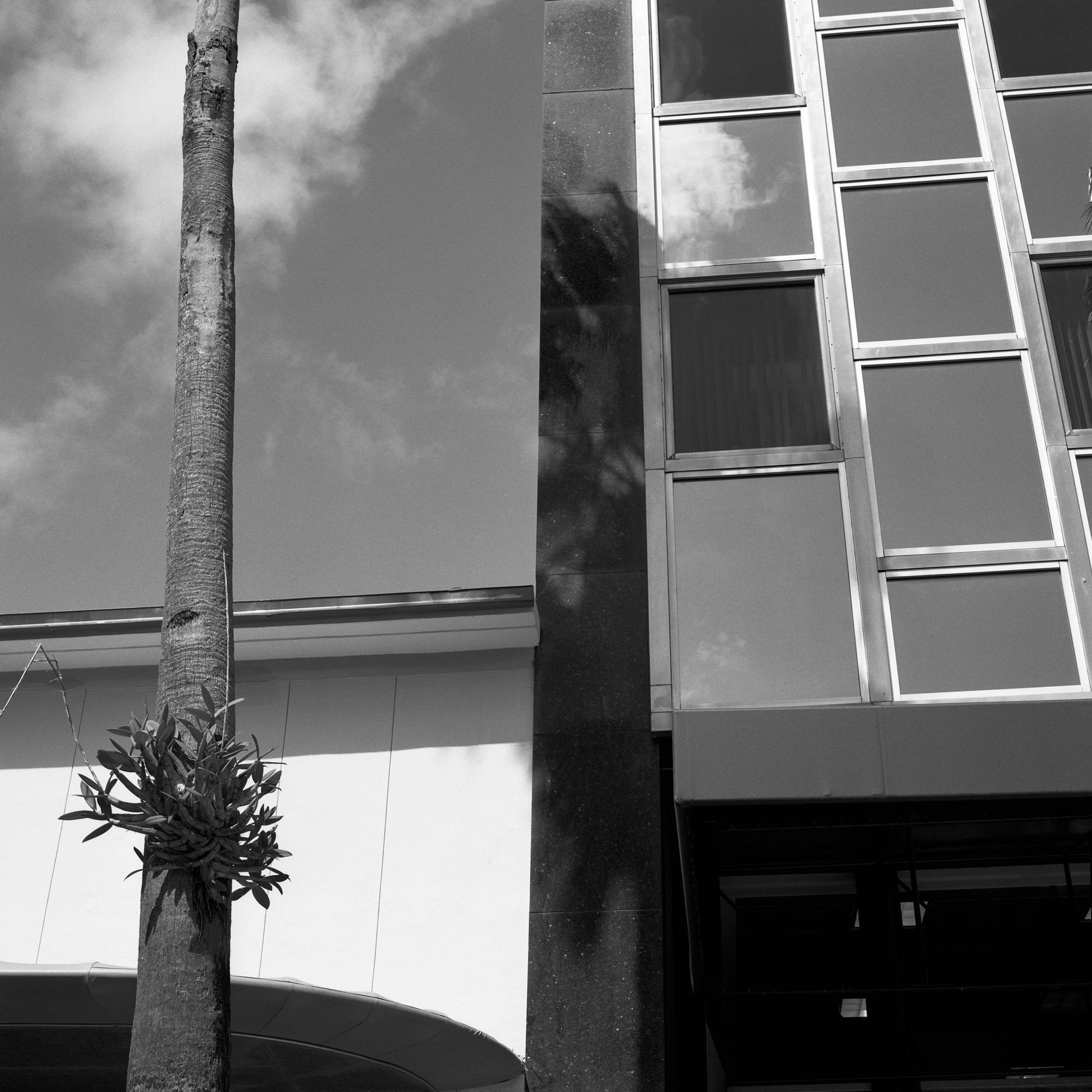 Miami Building & Tree