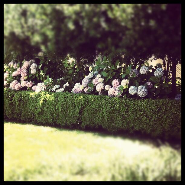 flowers flowers.jpg