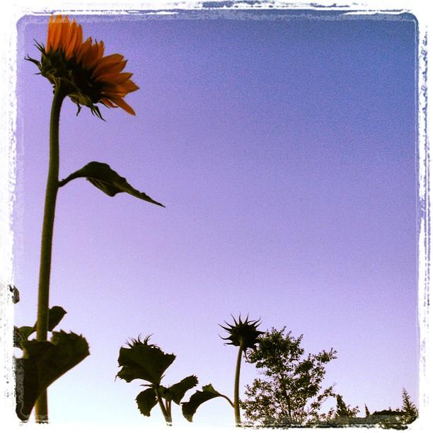 reaching for the sun.jpg
