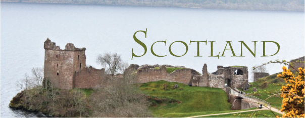 todays nest scotland 1.jpg