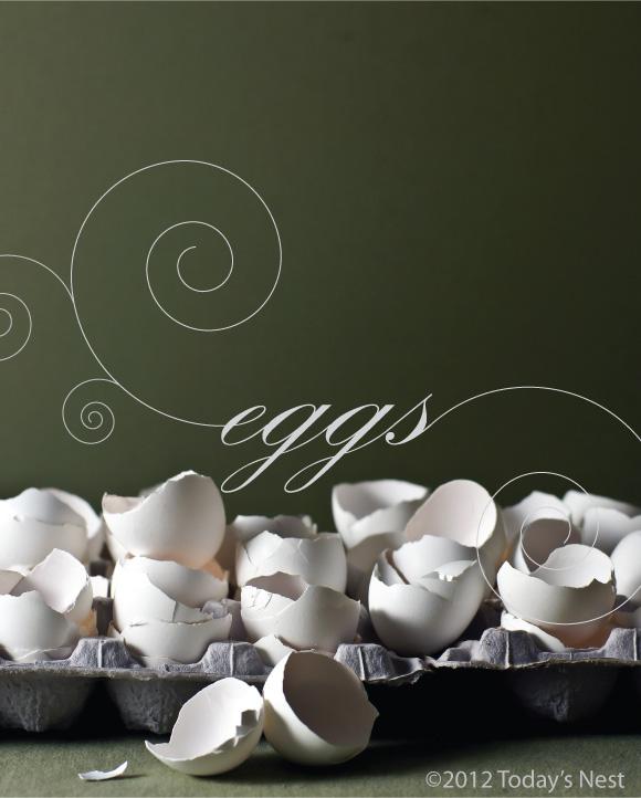 know-your-food-egg-basics1.jpg