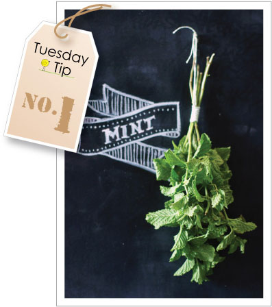 two-for-tuesday-tips-keeping-mint-and-sharp-shears1.jpg