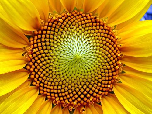 spiraling-out-of-control-the-golden-spiral2.jpg