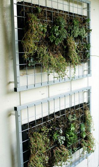 your-modern-garden-succulent-wall-garden3.jpg