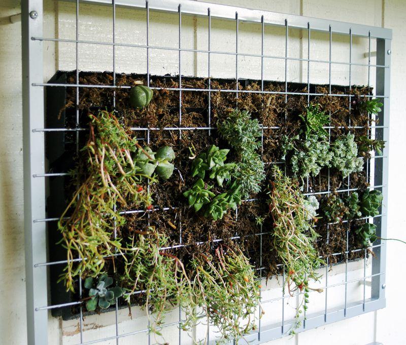 your-modern-garden-succulent-wall-garden4.jpg
