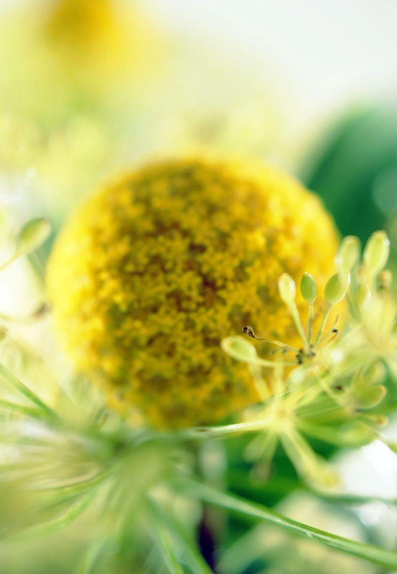 in-bloom-fresh-summer-floral5.jpg