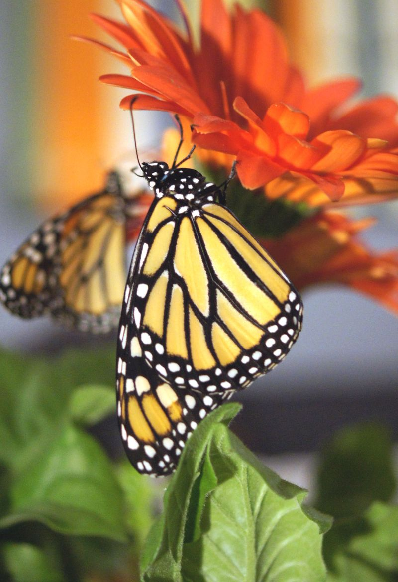 flutters-by-butterfly-garden-how-to1.jpg