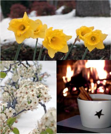 spring-ahead-winters-last-stand.jpg