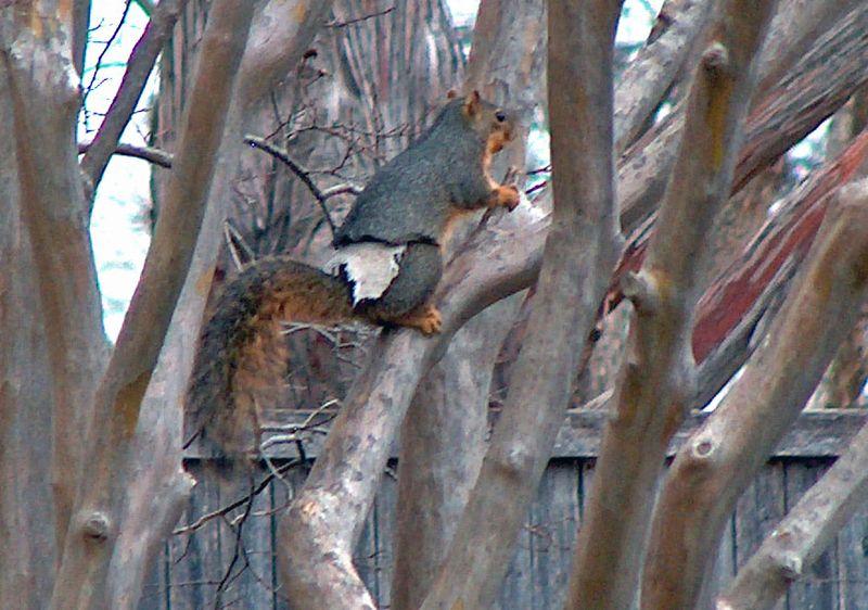 weekend-warriors-ii-the-squirrels-strike-back.jpg