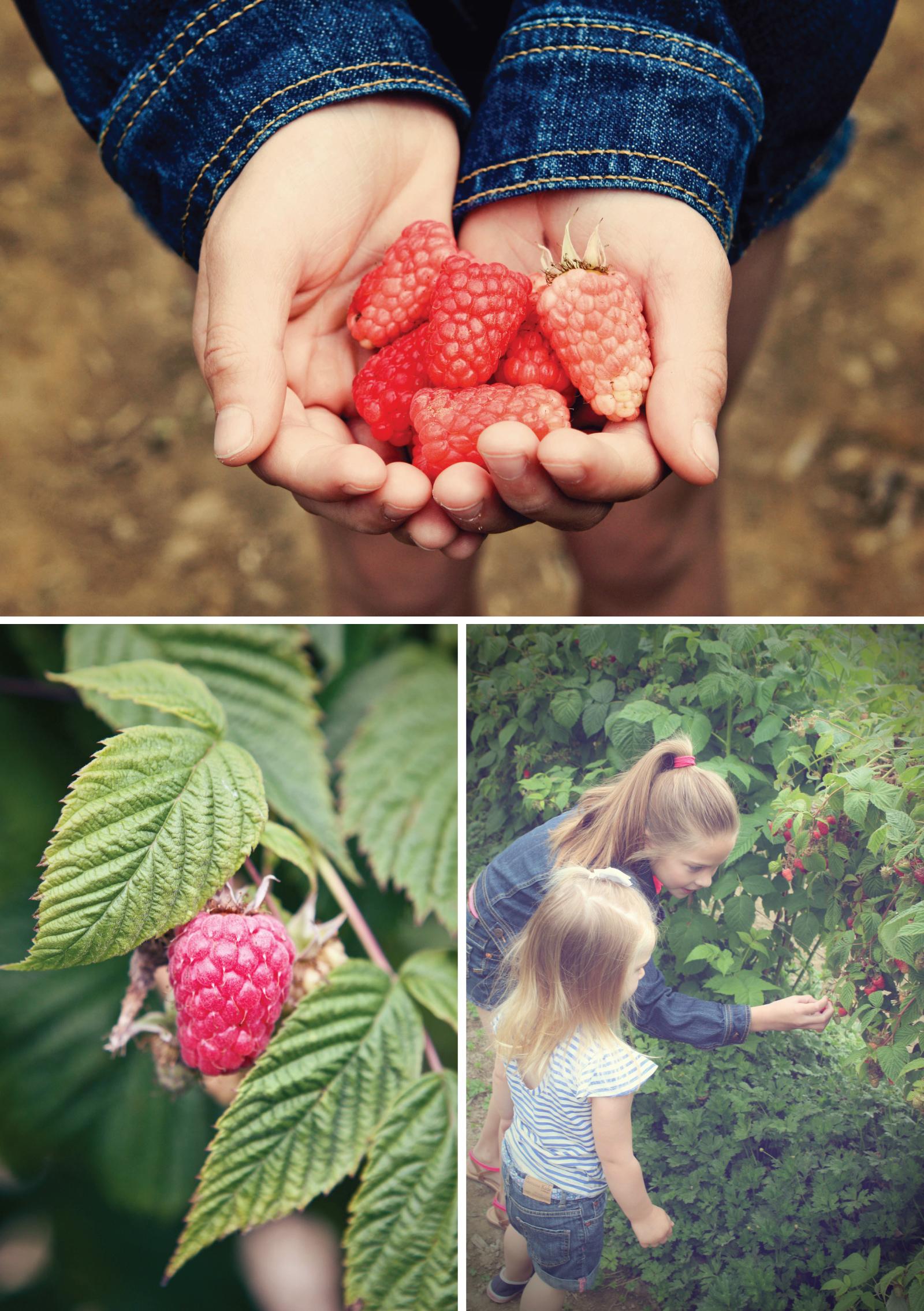 gni-berry2.jpg