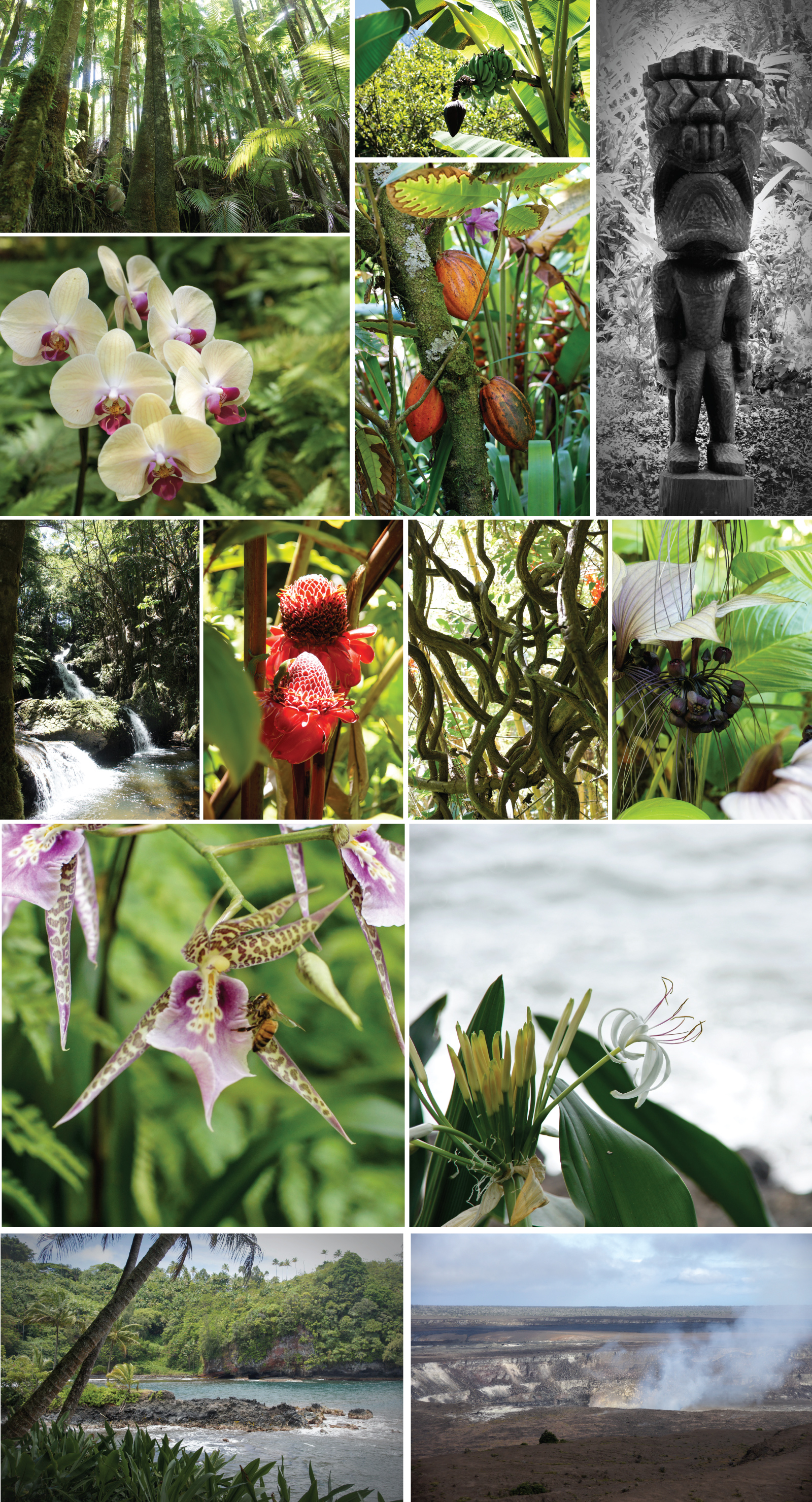 Botanical garden and a trip to the volcano.