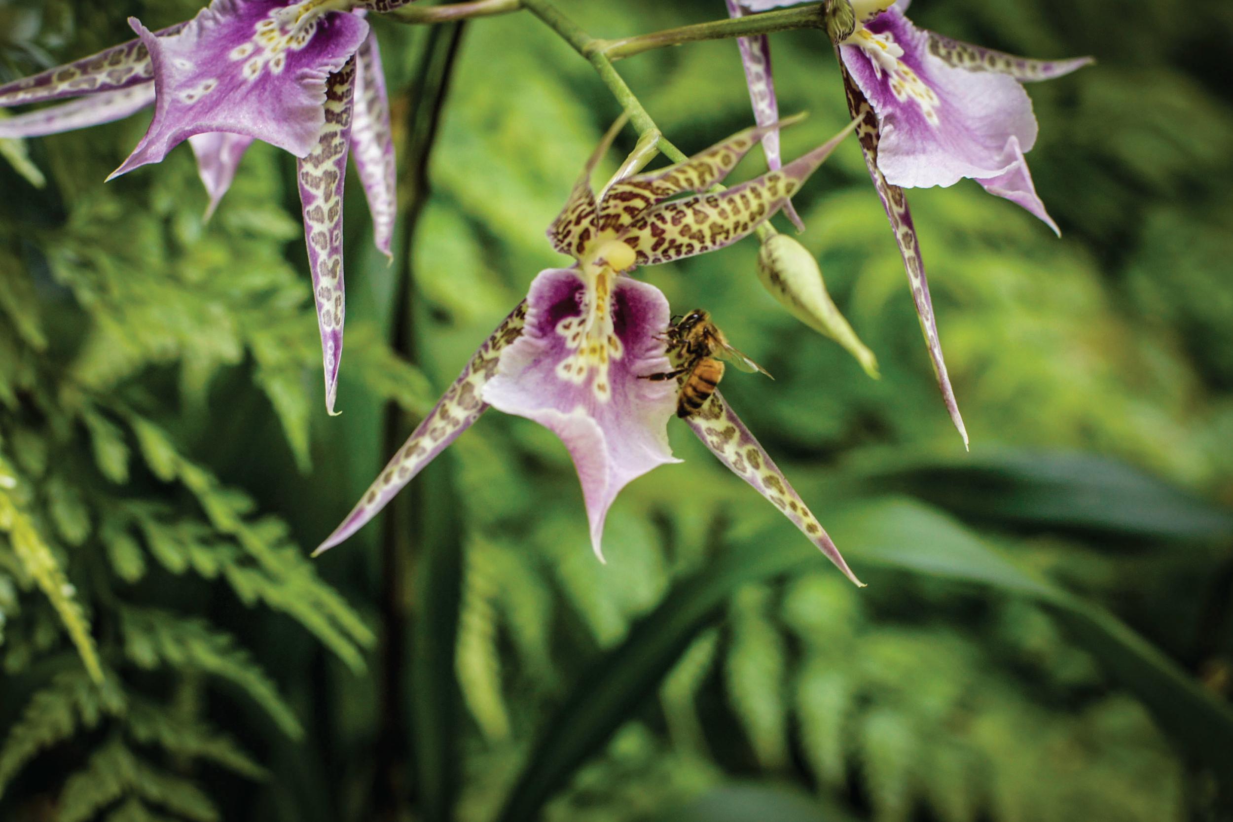 Bee Beautiful