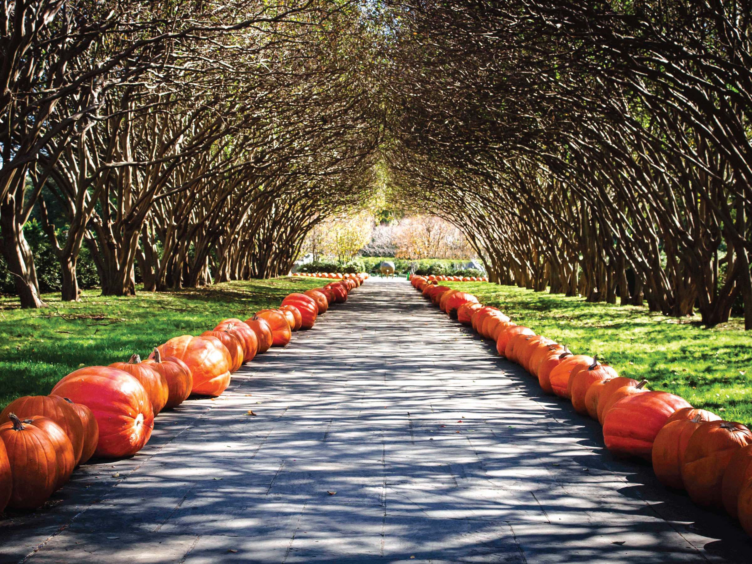 A trip through the fall installation at the Dallas Arboretum by Sam Henderson of Today's Nest
