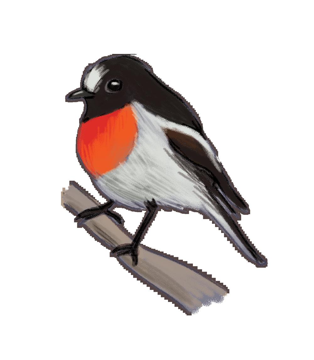 scarlet-robin.png