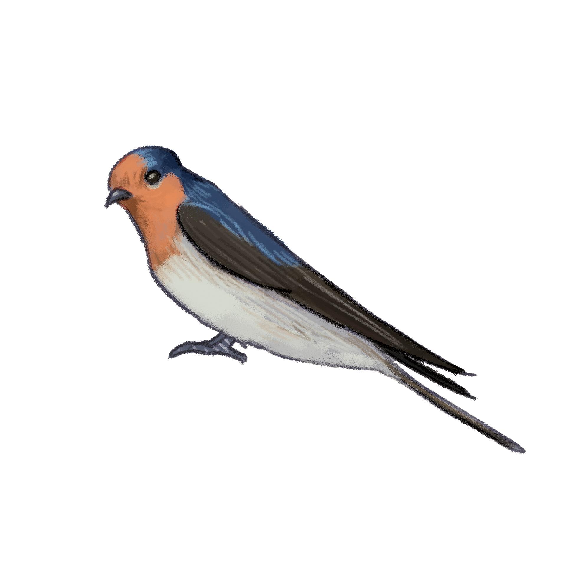 welcome-swallow.png