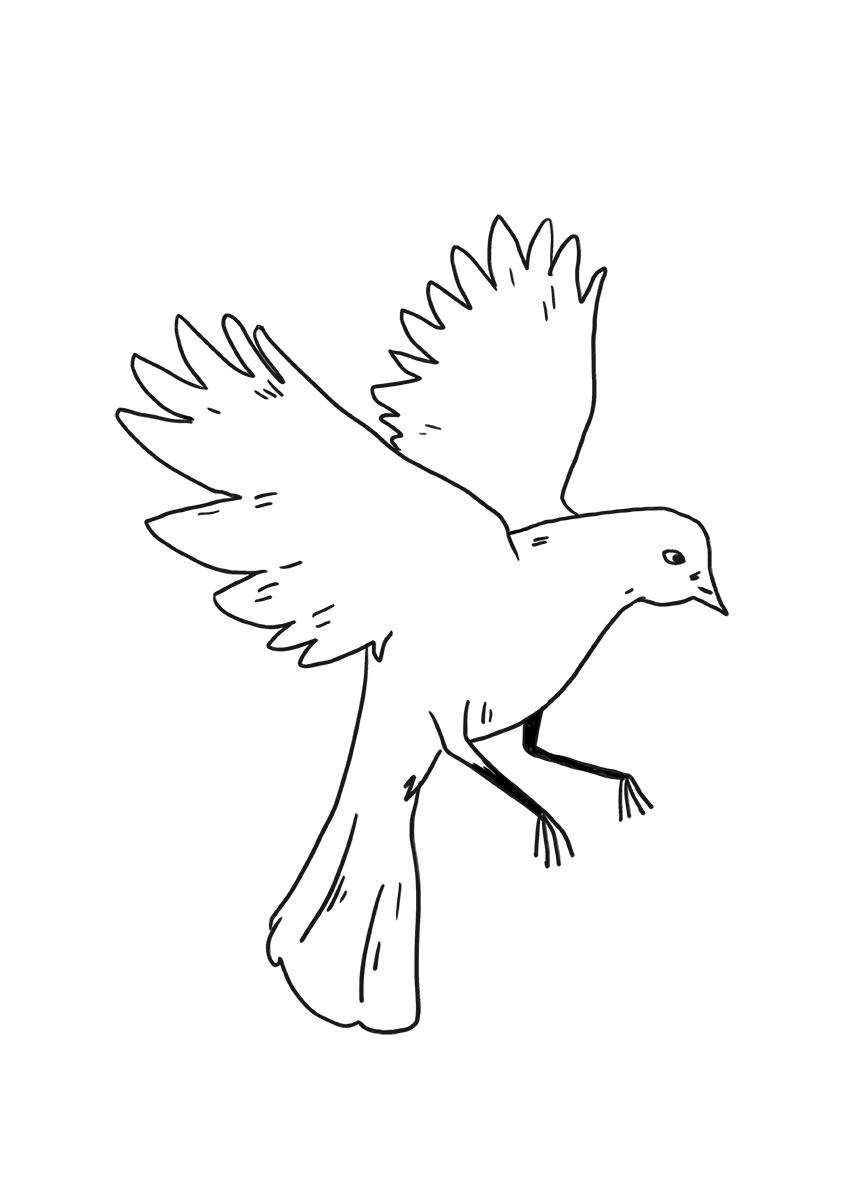 pashma bird tattoo copy.jpg