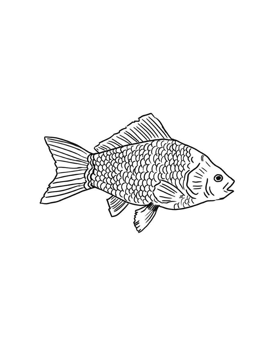 pashma fish tattoo copy.jpg
