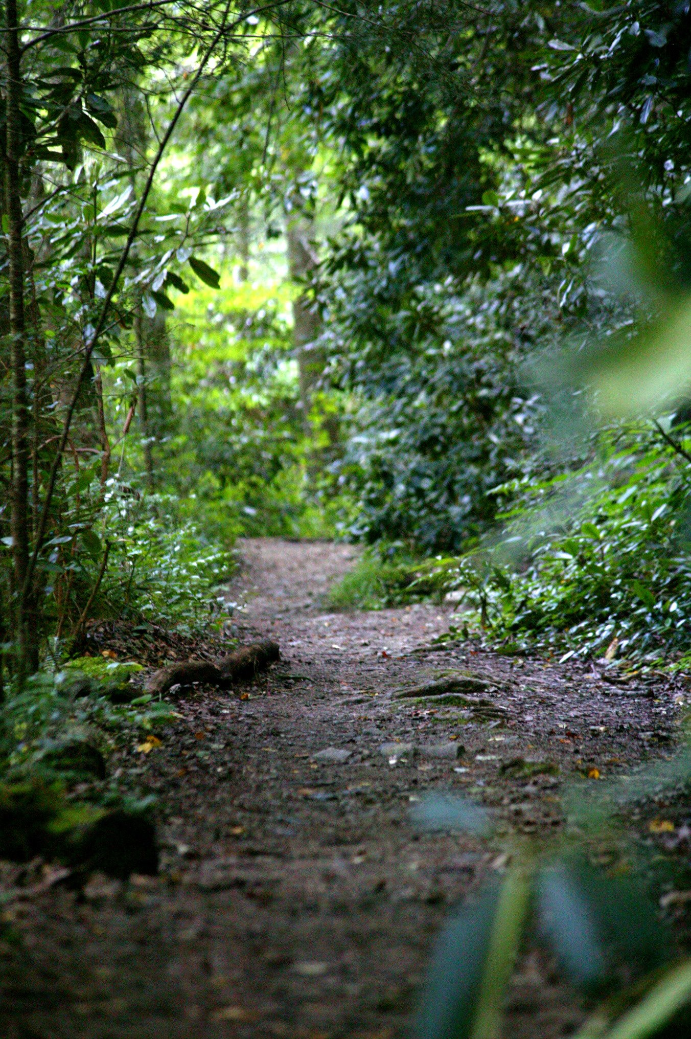 prayer trail.jpg
