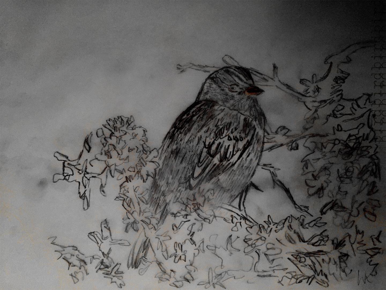 Bird_Drawing_3_wk.jpg