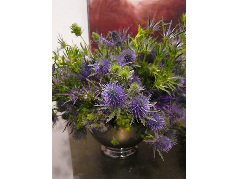 Tom Borgese_arrangements_Eryngiums.jpg