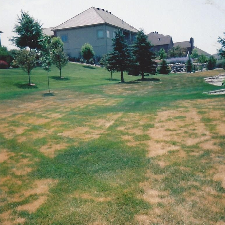 Sudden drought stress and mower wheel track injury.  Note the green oasis by the two sprinkler heads and the downspout at upper right.  The cure is watering three times at 12 hour intervals for one hour at each station.  Not doing anything or half-hearted watering usually results in permanent damage and thinning of the lawn.