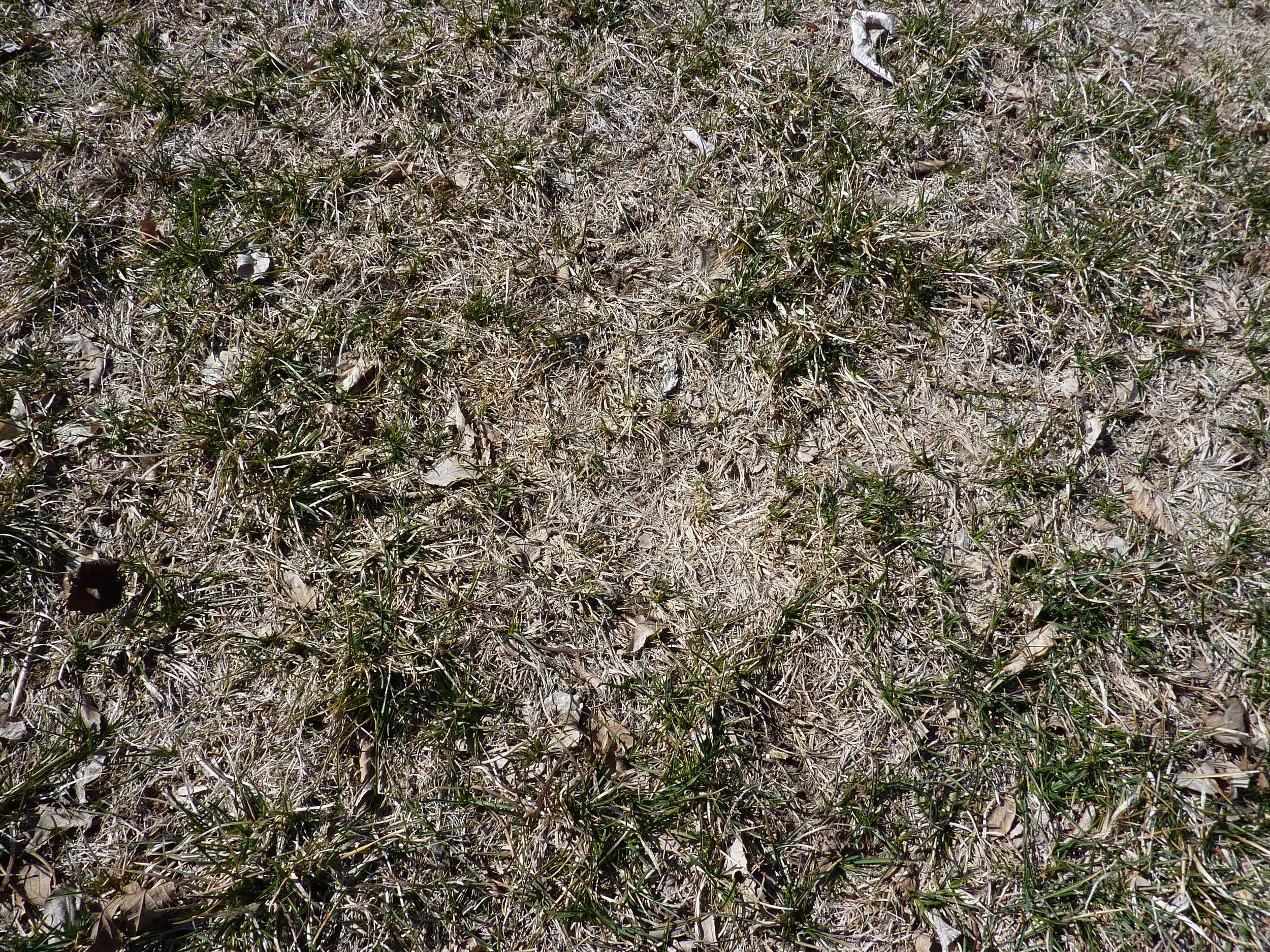Severe drought damage.