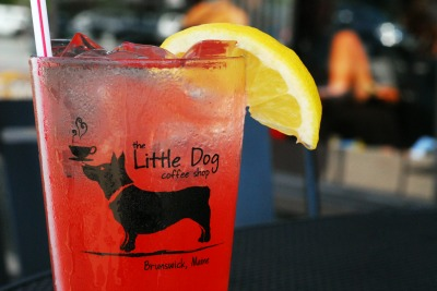 iced little dog.jpg