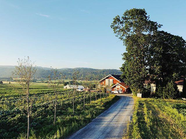 Litt Meen Gårds historie. Meen var opprinnelig en matrikkelgård som ble delt i to bruk rundt 1650. Gården strekte seg fra Skienselva i vest til Siljan i øst. Meen var en vingård, og man tror navnet kommer fra «Mær vin». Mær betyr smal. #Gjerpenshistorie