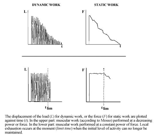 Figure 1: Monod H, Scherrer J. The Work Capacity of a Synergic Muscular Group.   Ergonomics  . 1965;8(3):329-338. doi:10.1080/00140136508930810.