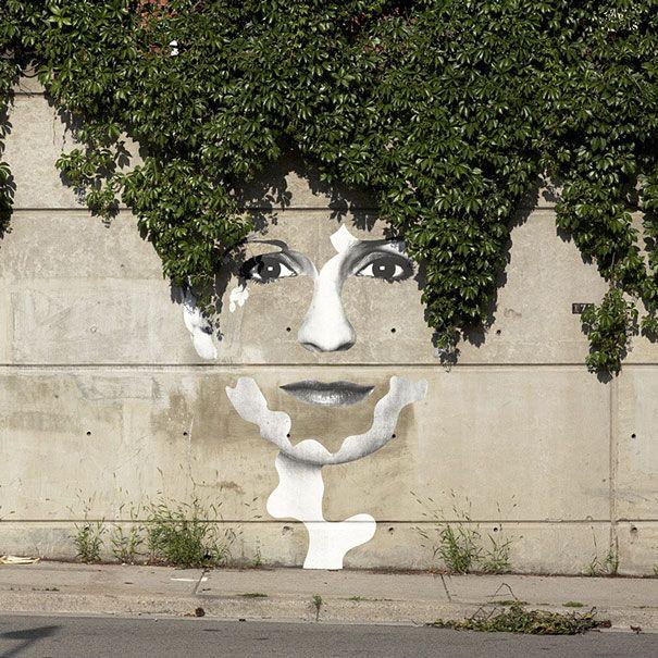 ivy cut.jpg